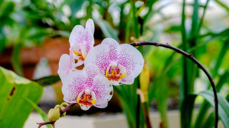 Orchid growing indoors