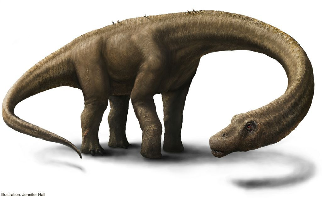 What's the World's Largest Dinosaur?   Live Science