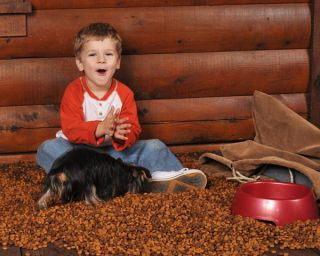 boy playing with puppy, eating dog food, health effects of eating dog food