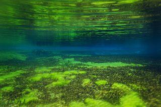 The lake has algae on the bottom