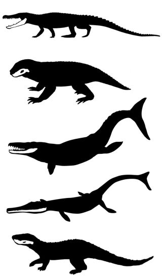 A sample of the morphological diversity seen in Mesozoic crocodiles, with the lower jaws highlighted in anatomical position