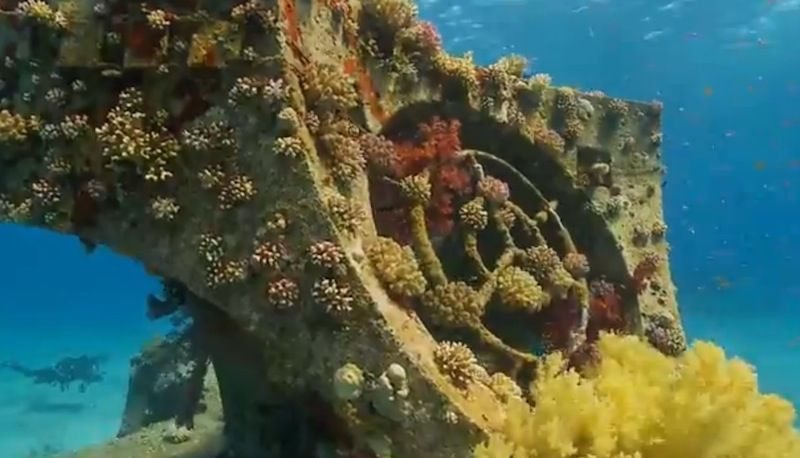12 Outstanding Artificial Reefs to Visit | Live Science