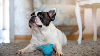 How to teach your dog to put toys away