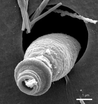 plankton ballistics