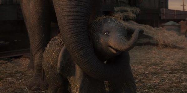 Dumbo and Mrs. Jumbo