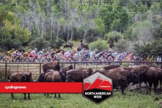 Buffalo add to the scenery of the Larry H. Miller Tour of Utah