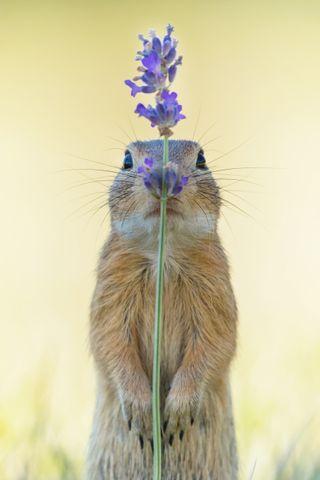 Squirrel playing hide and seek tops CEWE Photo Award 2019