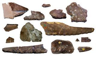 Pterosaur fossil fragments
