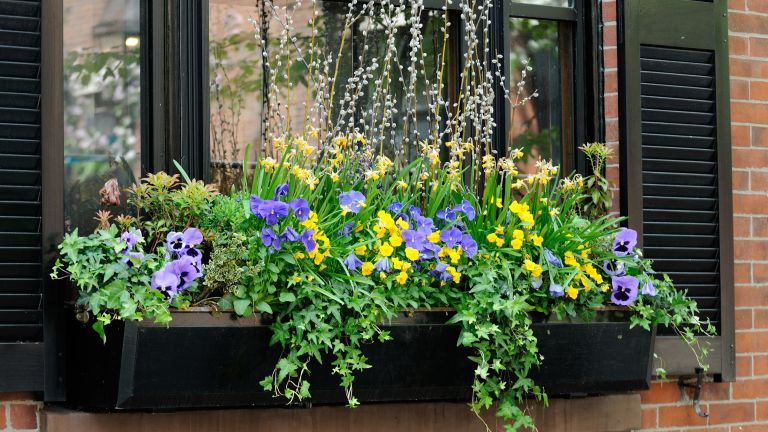 window box ideas: black planter with violas