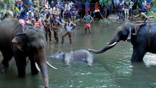 Police and onlookers stand on the banks of the Velliyar River in Palakkad district of Kerala on May 27, 2020, as a dead wild elephant is pulled from the water. The elephant died following injuries it sustained after eating a pineapple filled with firecrackers.