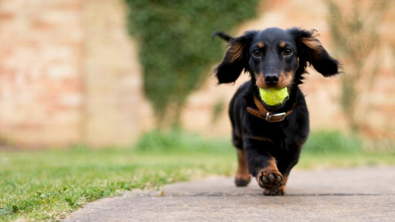 dog names: dog running with ball in mouth