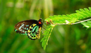 butterfly-101103-02