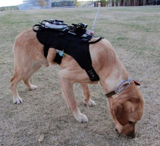 dog in high-tech harness
