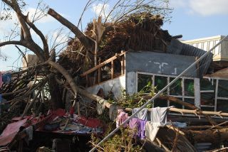 haiyan trees in houses