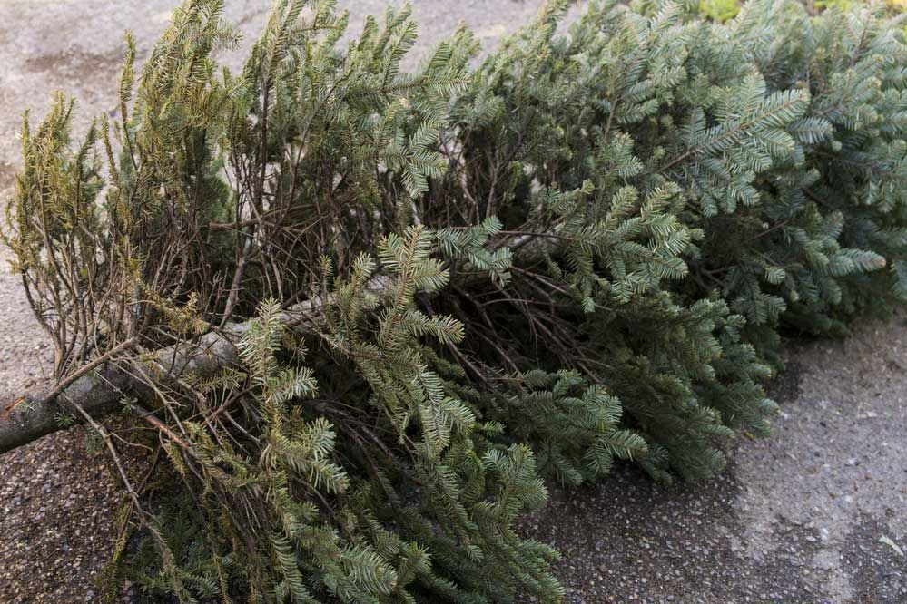 Christmas tree recycling: what are the options?