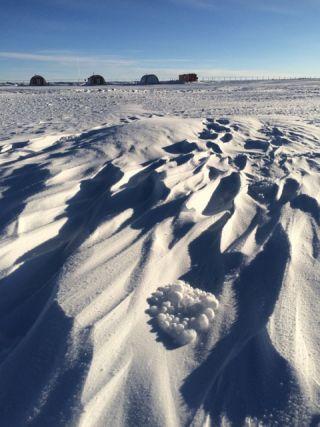 antarctic-tumbleweeds.jpg