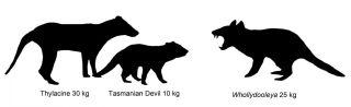 Australian Marsupial Size Comparison