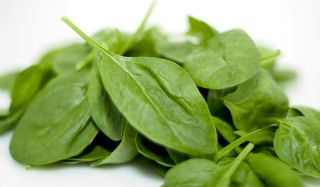 spinach-leaves-110103-02