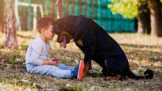 Rottweiler and boy sitting in garden