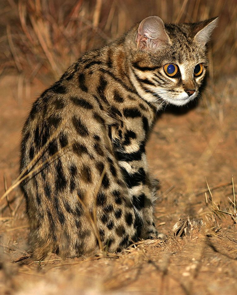 Adorable, Remorseless Killing Machine Is World's Deadliest