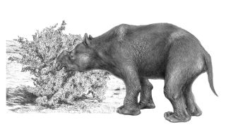 A line drawing of a giant wombat muching on a shrub.