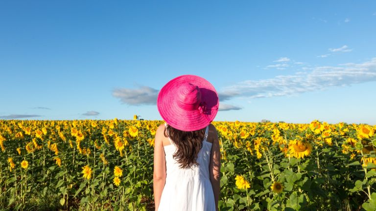 Woman in sunflowers field, Provence, France - stock photo