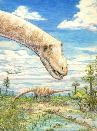 how sarmientosaurus musacchioi lived