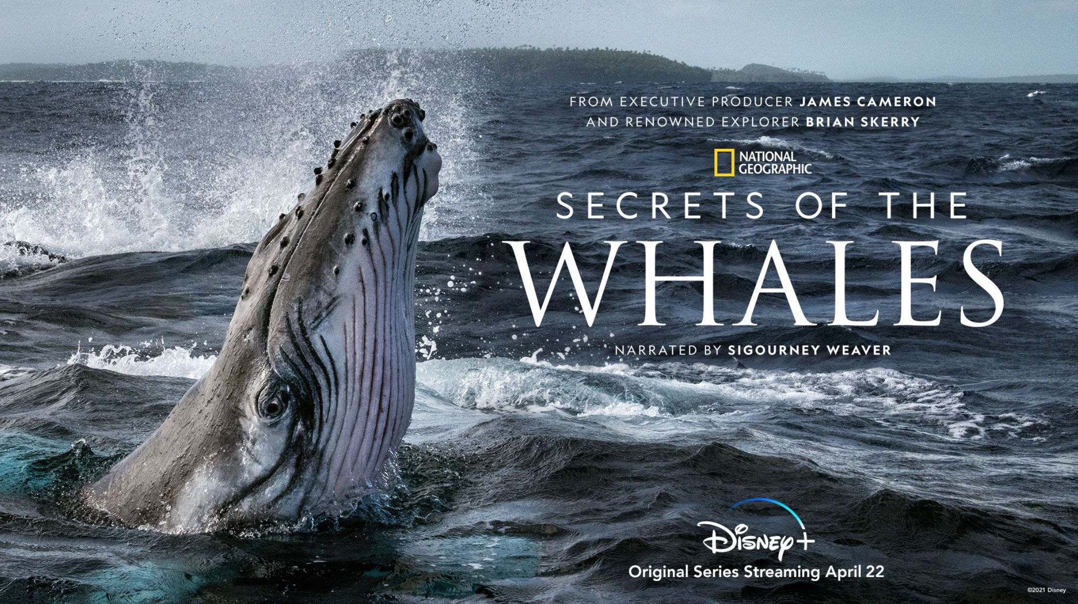 Exclusive: 'Secrets of the Whales' creator Brian Skerry on filming his stunning new docu-series for Nat Geo | Space