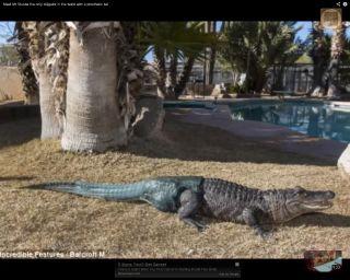 alligator-prosthetic
