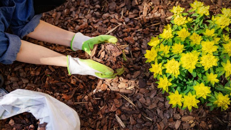 mulching with bark chippings