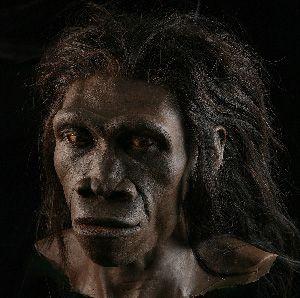 A reconstruction of human ancestor Homo Erectus