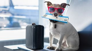 Dog in airport with sunglasses on, a suitcase and plane ticket in mouth