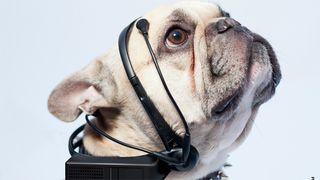 Raspberry Pi powered Dog to English translator reaches funding goal