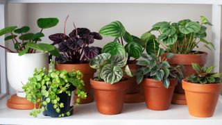 Do indoor plants purify air? Image shows house plants in pots