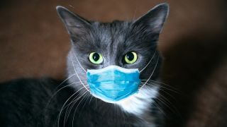A cat wearing a mask