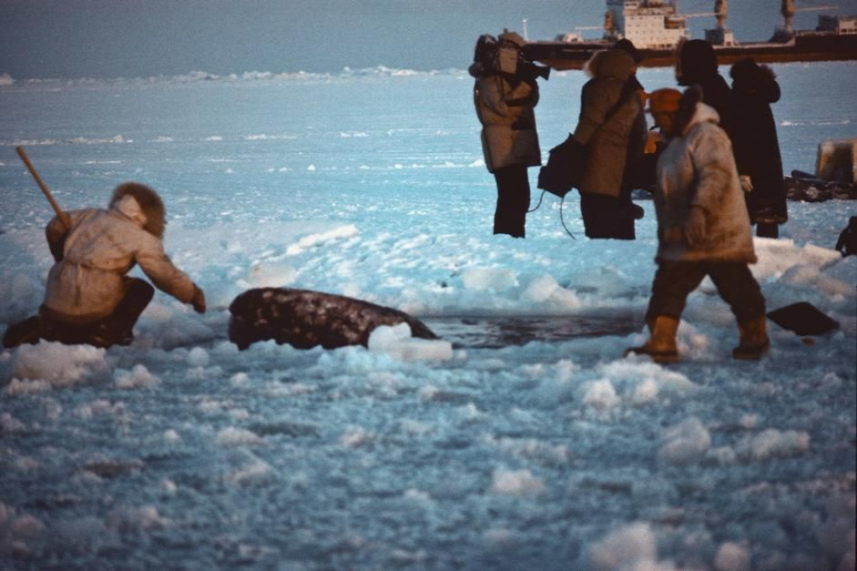 Big Miracle: The Real Rescue in Images | Live Science