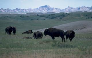 Badlands National Park in South Dakota national park service