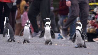 Penguin Town — taking a waddle through the streets!