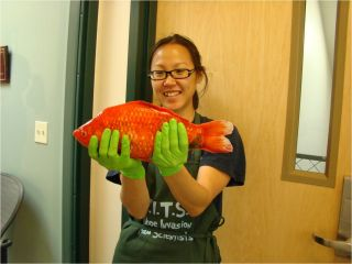 girl holding giant goldfish