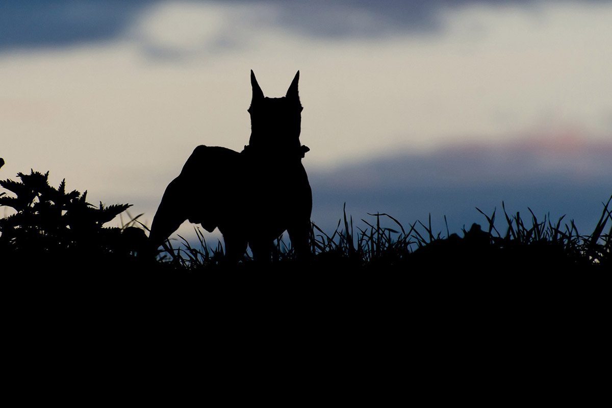 Dog-Mauling Death: Why Dogs Turn on Their Owners | Live Science