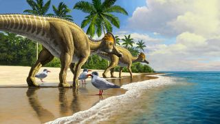 Duckbill dinosaurs evolved in North America, spreading to South America, Asia, Europe and finally Africa.