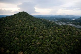 Aerial view of Grão Pará Ecological Station, the world's largest block of protected rainforest, located on the northern margin of the Amazon River.