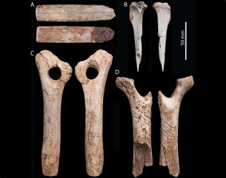 A bone from the right forearm of an adult human unearthed in Gough's Cave bears more than signs of cannibalism; researchers found zigzagging cuts that were likely intentionally engraved into the bone.