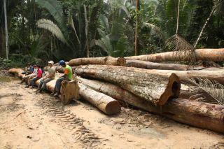 Logging in the rainforest, Amazon, deforestation, climate change