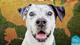 A dog in front of a map of the US at the Best Friends Animal Society