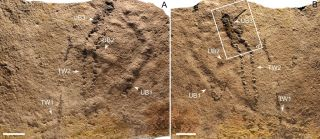 Oldest footprints