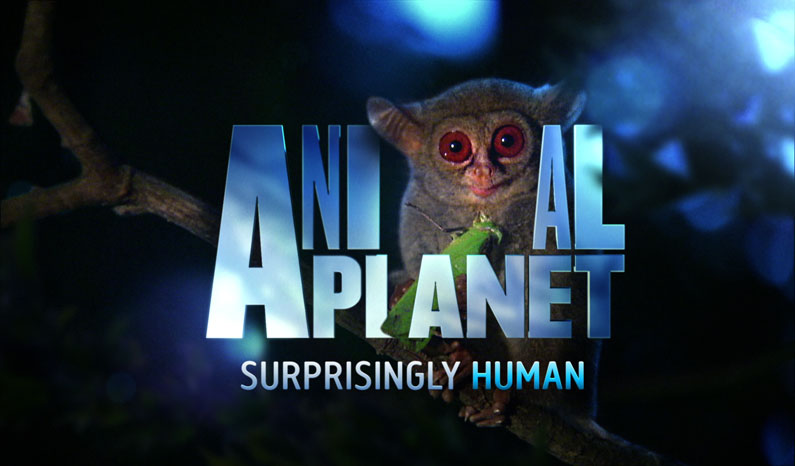 New logo and branding for Animal Planet | Creative Bloq