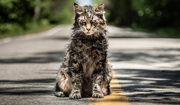 Pet Sematary cat Church