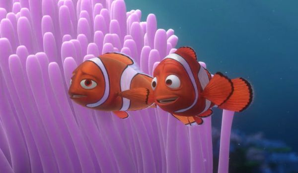 Coral Finding Nemo