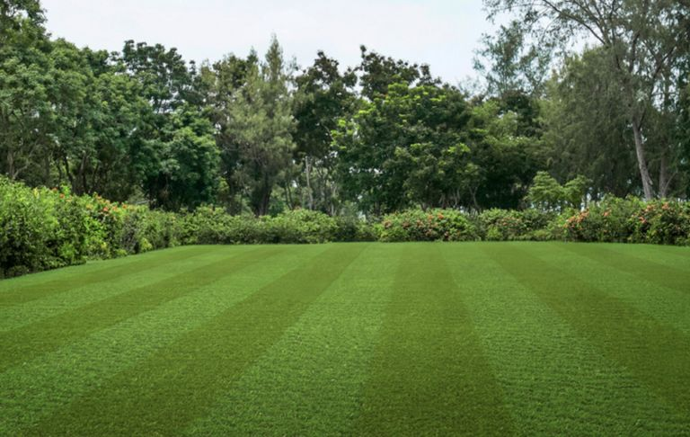 Lazy Stripe artificial grass by Lazy Lawn